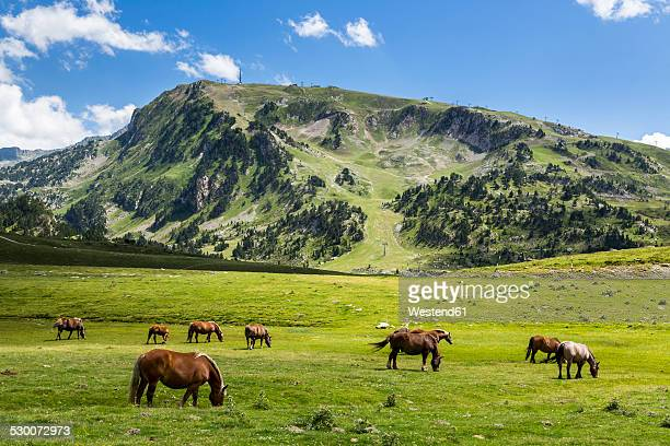 spain, catalonia, pyrenees, horses grazing at pla de beret - provinz lerida stock-fotos und bilder
