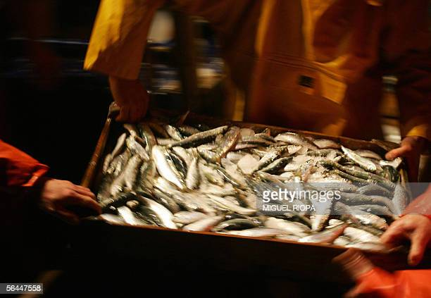 Crew members of the fishing trawler 'Diego David' hand over the sorted catch of sardines and anchovies after arriving back at port in Vigo 16...