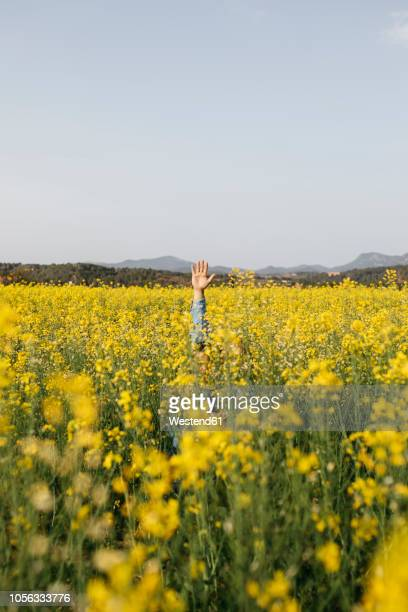 Spain, father and little son hiding in a rape field