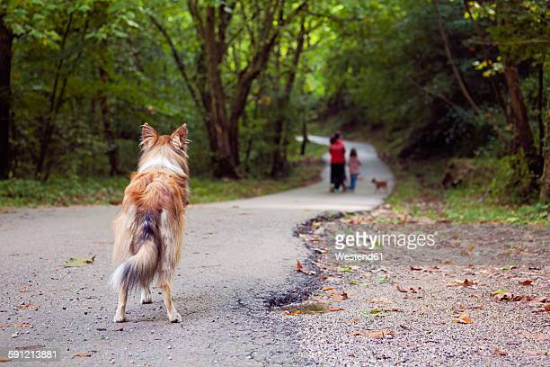 Spain, Girona, Abandoned dog standing on footpath watching people