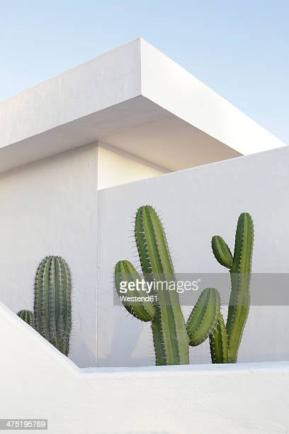 Spain, Lanzarote, Puerto del Carmen, Cactus growing between walls