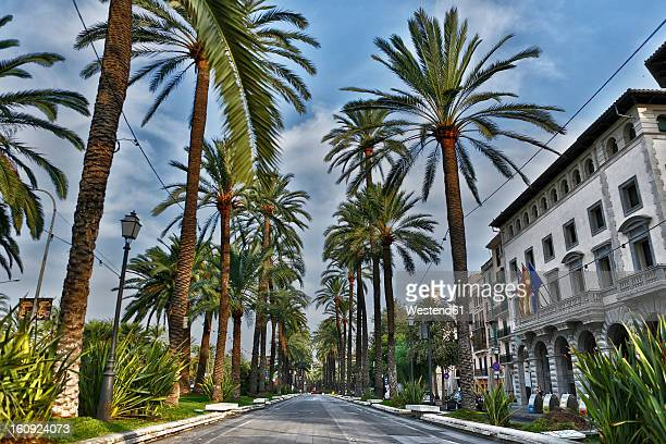 Spain, Palma, Mallorca, View of alley with palm trees