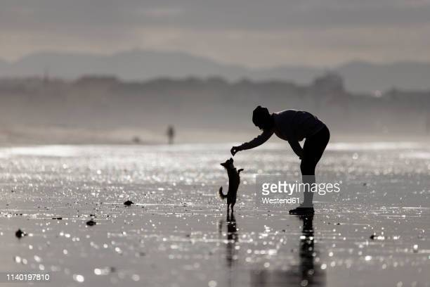 spain, tarifa, silhouette of woman playing with her little dog on the beach - bend over woman stock pictures, royalty-free photos & images