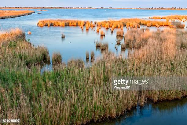 spain, tarragona, ebro delta, encanyssada lagoon at sunset - delta del ebro fotografías e imágenes de stock