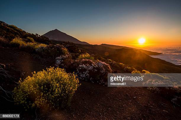 spain, tenerife, dirt road at pico del teide region - pico de teide stock pictures, royalty-free photos & images