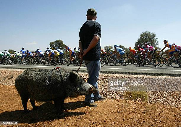 The pack rides past a man walking his wild boar during the fourth stage of the Tour of Spain from Ciudad Real to Argamasilla de Alba 30 August 2005...
