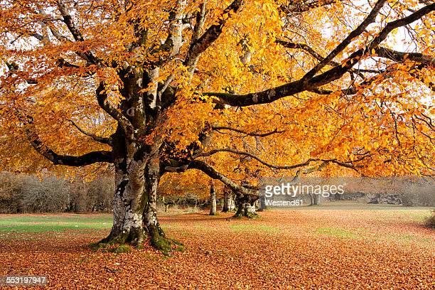 Spain, Urbasa-Andia Natural Park, trees in autumn