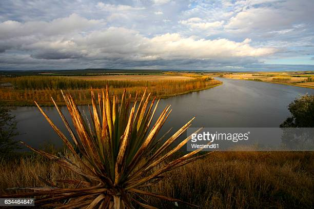 spain, valladolid province, nature reserve banks of castronuno - valladolid spanish province stock pictures, royalty-free photos & images