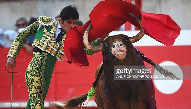 Spaniard Miguel Angel Perera fights a Spanish Jandilla bull on September 20 2014 at the Feria des Vendanges in the southern French town of Nimes AFP...