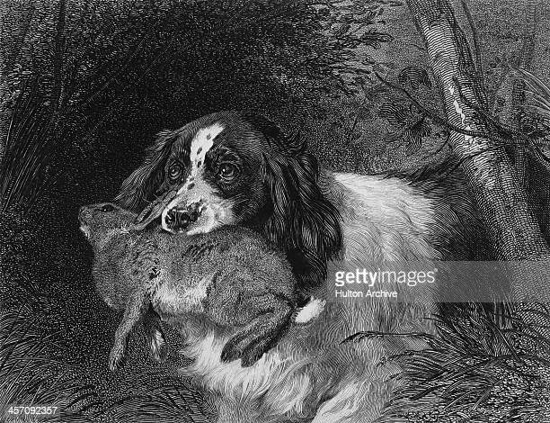 A spaniel brings carries a rabbit in its mouth during a hunt circa 1832 Engraved by J Webb from an original painting by Edwin Henry Landseer Original...