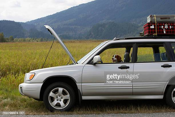 spaniel in sports utility vehicle parked at roadside with bonnet open - brittany spaniel stock pictures, royalty-free photos & images