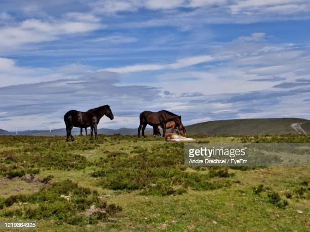 spanien horses - spanien stock pictures, royalty-free photos & images