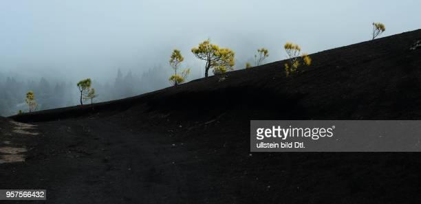 Spanien, La Palma: Landschaft des Lavafeldes El Jable an der Cumbre Nueva.
