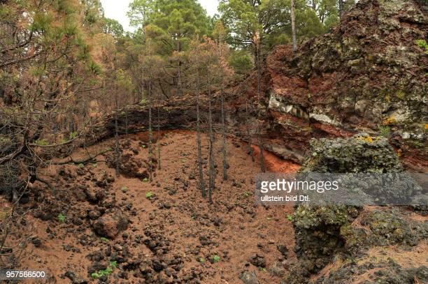 Spanien, La Palma: Vulkanlandschaft auf der kanarischen Insel La Palma. Cumbre, Vulkan Bernadino. ESP, Spain, La Palma: Volcanic landscape on the...
