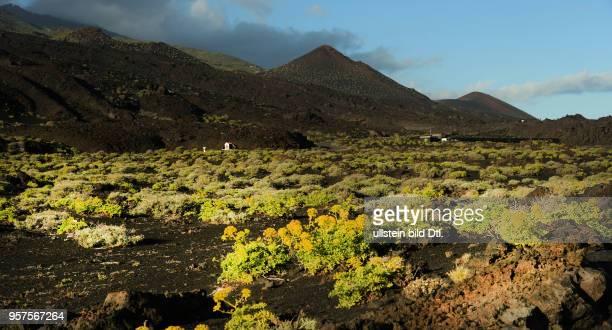 Spanien, La Palma: Vulkanlandschaft auf der kanarischen Insel La Palma. Faro, Suedspitze. ESP, Spain, La Palma: Volcanic landscape on the Canary...