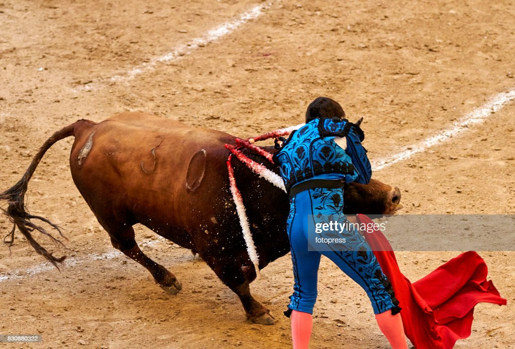 Spanish bullfighter Cayetano Rivera Ordonez is struck by a Maria Loreto Charro Santos ranch fighting bull during the bullfighting as part of the La Peregrina Festival at Plaza de Pontevedra bullring on August 12, 2017 in Pontevedra, Spain.