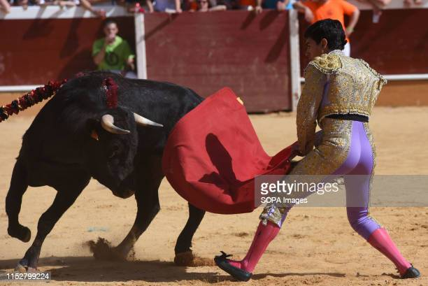 Spanish bullfighter José Manuel Serrano performs with a Hermanos Marcén ranch fighting bull at the 'La Chata' bullring during a bullfight festival in...