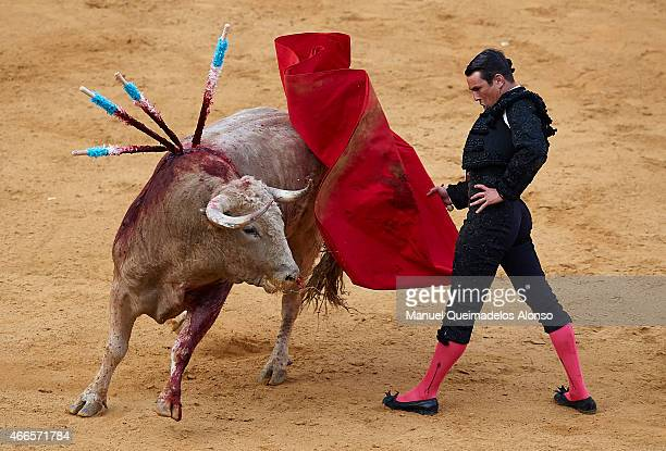 Spanish bullfighter Jose Maria Manzanares performs during a bullfighting as part of the Las Fallas Festival in a bullfight on March 16 2015 in...
