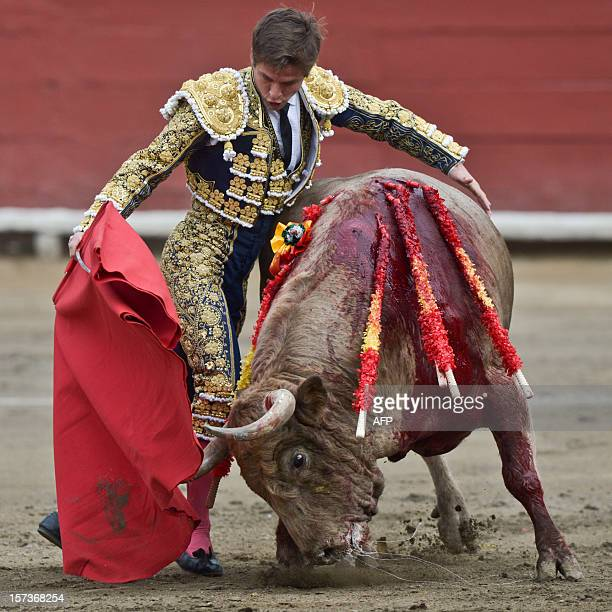 Spanish bullfighter Julian Lopez aka 'El Juli' performs during the 'Senor de los Milagros' festival at the Acho bullring on December 2 2012 in Lima...