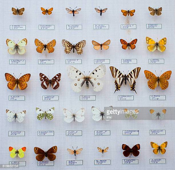 spanish butterflies collection - insect stock pictures, royalty-free photos & images