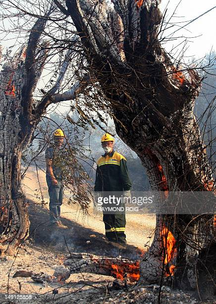 Spanish firefighters look at an olive tree burning following a forest fire on July 23 2012 near the spanish village of Figueras by the French border...