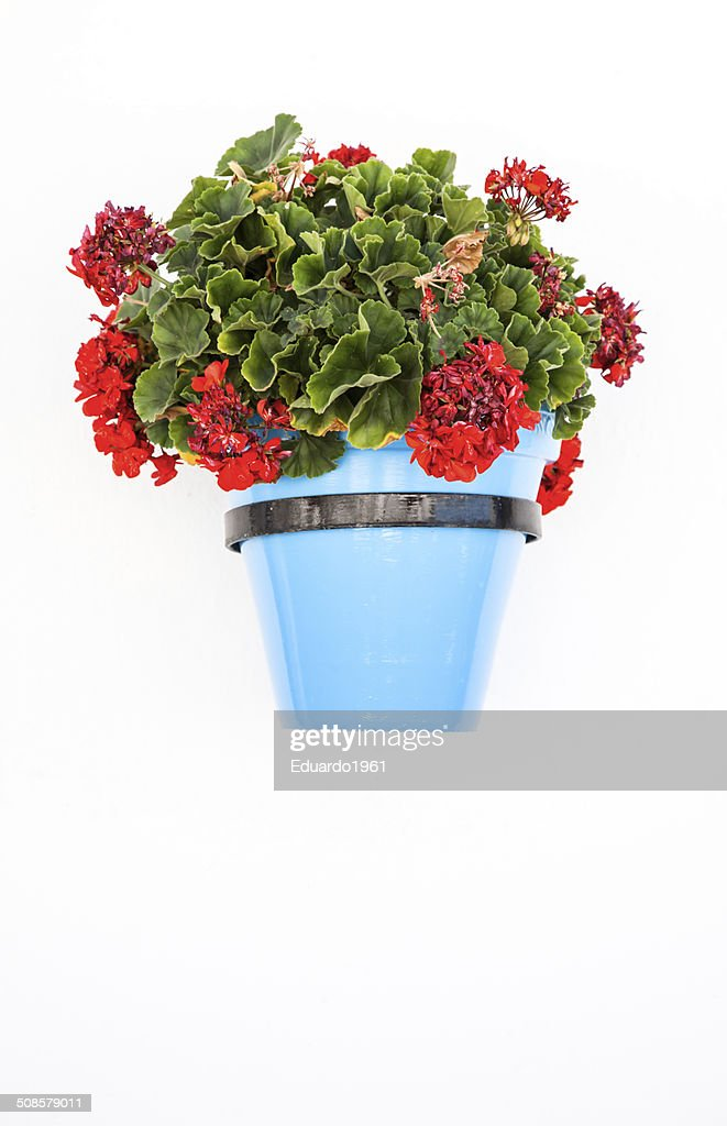 Spanish flowers : Stock Photo
