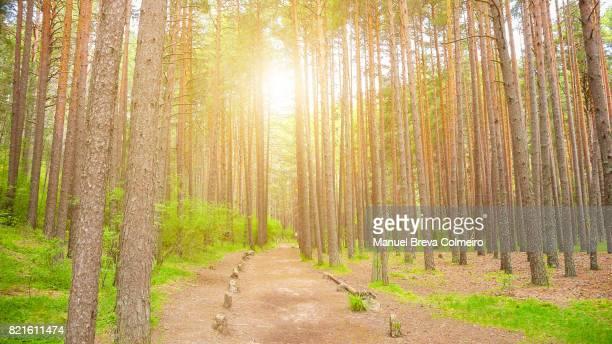 spanish forest - grove imagens e fotografias de stock
