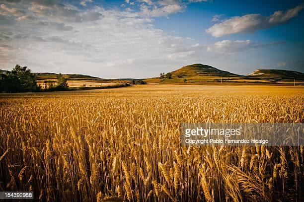 spanish landscape - カスティーリャレオン ストックフォトと画像