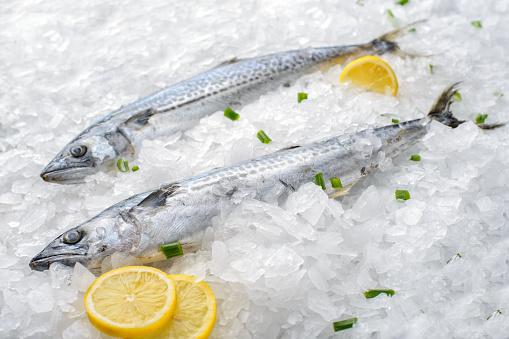 Spanish Mackerel - gettyimageskorea