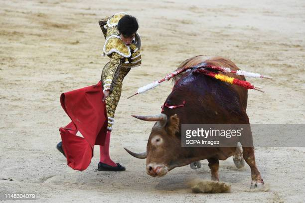 Spanish matador Alvaro Lorenzo performs with a Garcigrande ranch fighting bull during a bullfight at the Las Ventas bullring in the 2019 San Isidro...