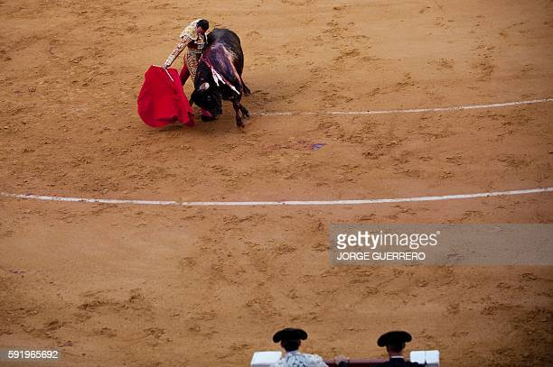Spanish matador Enrique Ponce performs a pass on a bull during a bullfight at the La Malagueta bullring in Malaga on August 19 2016 / AFP / JORGE...