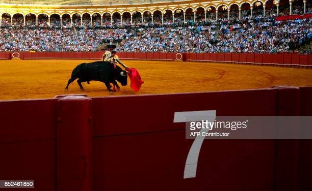 Spanish matador Enrique Ponce performs a pass with muleta on a bull during a bullfight at the Maestranza bullring in Sevilla on September 23 2017 /...