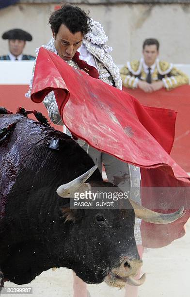 Spanish matador Finito de Cordoba performs a muleta pass to a Fuente Ymbro fighting bull on September 12 2013 during the Bullfighting wine harvest...