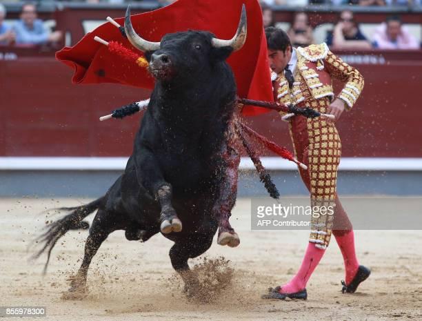 Spanish matador Miguel Angel Perera performs a pass on a bull during a bullfight at Las Ventas bullring in Madrid on September 30 2017 / AFP PHOTO /...