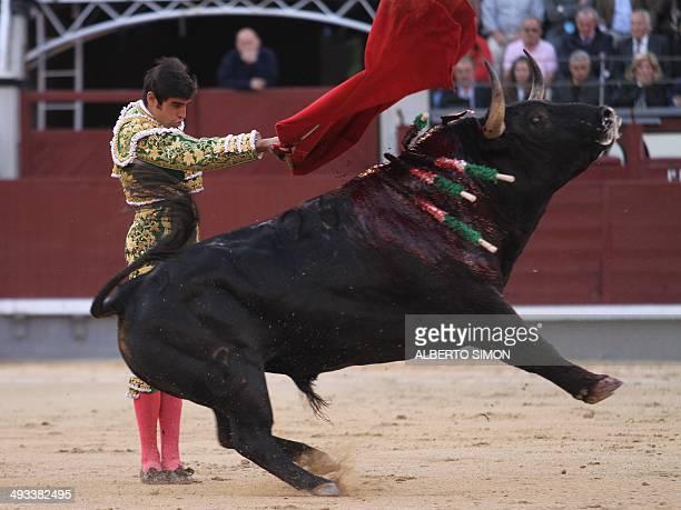 Spanish matador Miguel Angel Perera performs a pass to a bull during the San Isidro Feria at Las Ventas bullring in Madrid on May 23 2014 AFP PHOTO/...