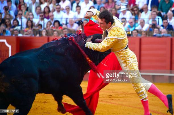 Spanish matador Rafael Serna is caught by the horn of the bull in his armpit during a bullfight at the Maestranza bullring in Sevilla on September 24...