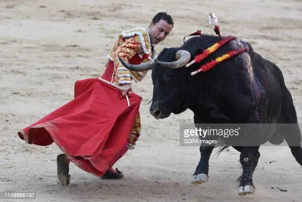 Spanish matador Rafaelillo performs with a Cuadri ranch fighting bull during a bullfight at the Las Ventas bullring in the 2019 San Isidro festival...
