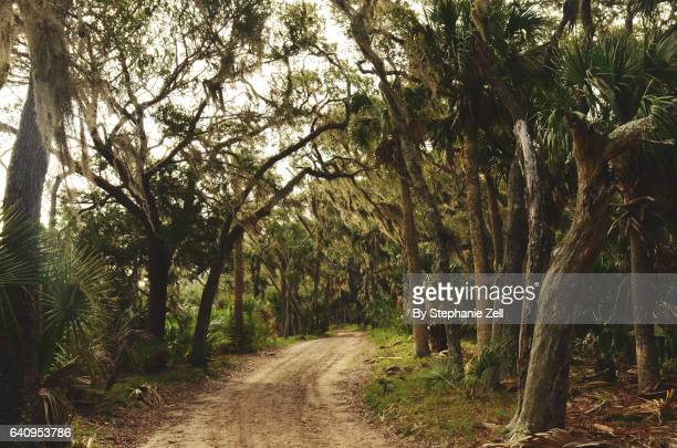 Spanish Moss and Live Oaks along a winding dirt road on Ossabaw Island