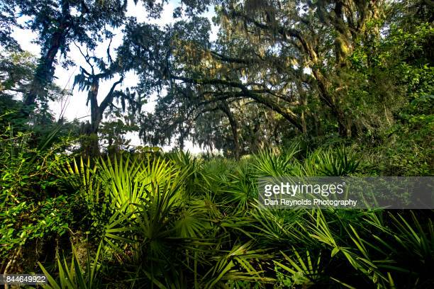 spanish Moss in Live Oak trees with tropical plants