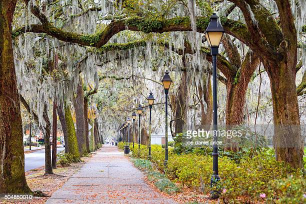 spanish moss, street, savannah, georgia, america - spanish moss stock pictures, royalty-free photos & images