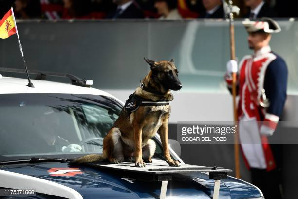 Spanish police rescue dog parades during the Spanish National Day military parade in Madrid on October 12, 2019.
