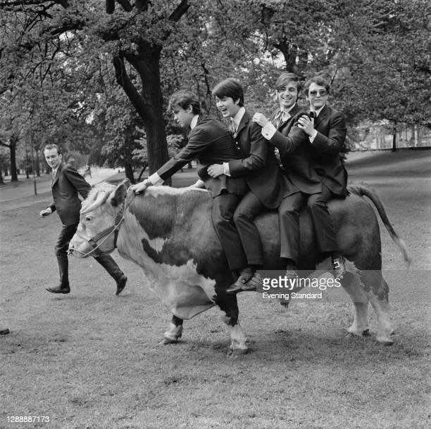 Spanish rock band Los Brincos riding on Harold the bull in Hyde Park, London, 24th May 1967. From left to right, they are rhythm guitarist Vicente...