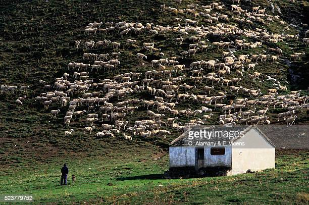 spanish shepherd and sheep in anisclo - alamany fotografías e imágenes de stock