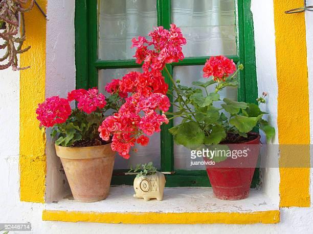 spanish window, red geraniums