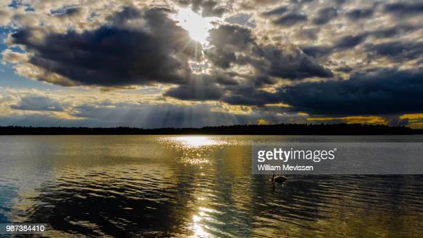 sparkling golden lake - william mevissen bildbanksfoton och bilder