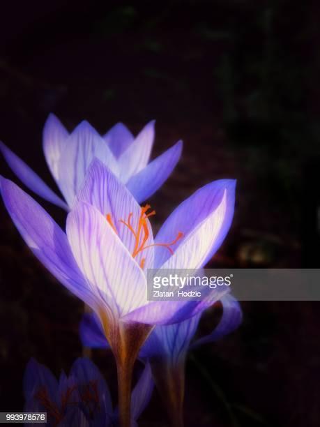 Sparkling Saffron