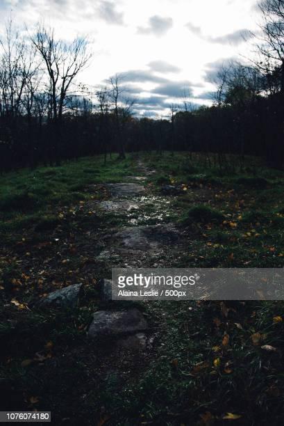 Sparkling trail