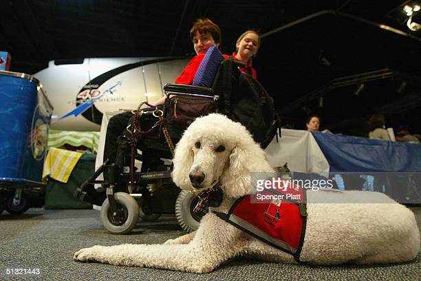 Sparky a standard poodle service dog sits with his owner Dori Tempio at the third annual Search and Rescue and Service Dog Day and Awards for...