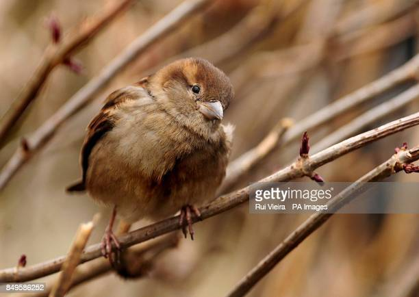 A Sparrow at Twycross Zoo in Leicestershire