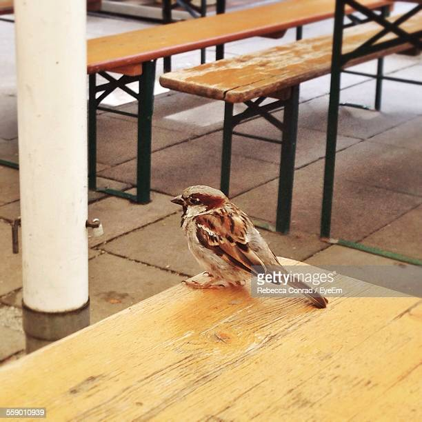 Sparrow Perching On Wooden Table